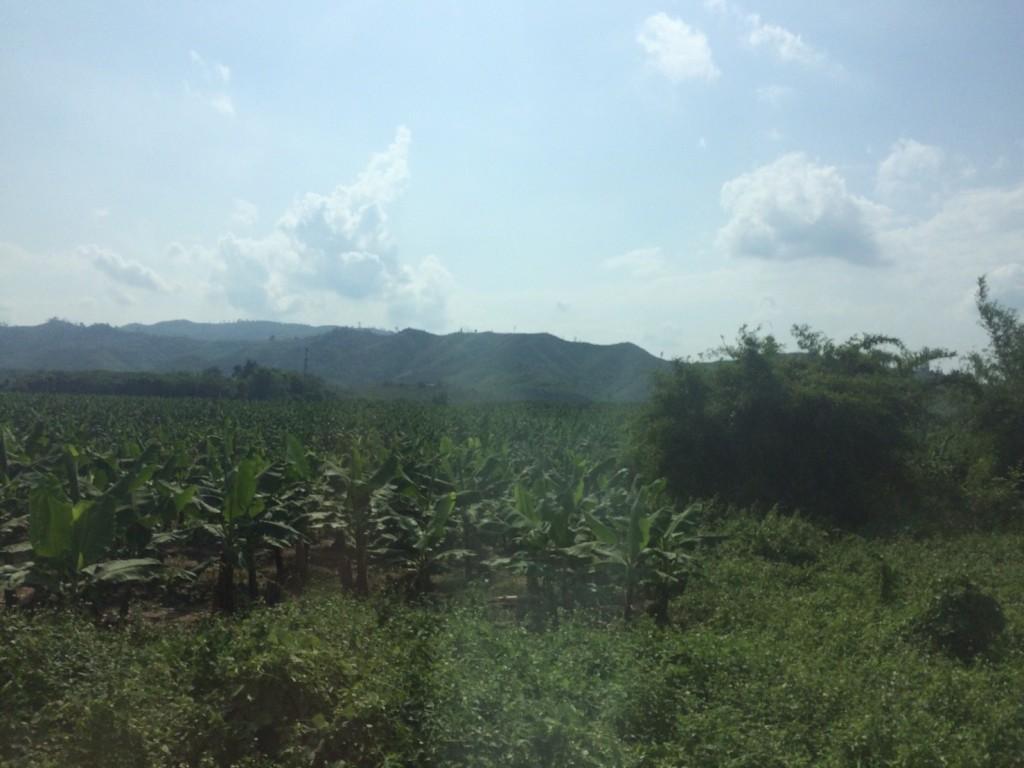 ไทย-จีน: ท่าเรือ และสวนกล้วย
